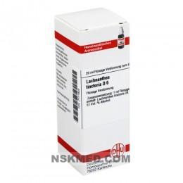 LACHNANTHES tinctoria D 6 Dilution 20 ml